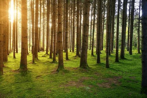 plantez des arbres gratuitement avec refoorest