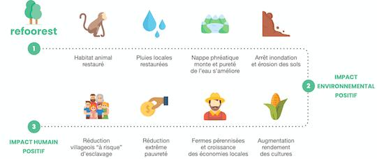 impact de la plantation d'arbres